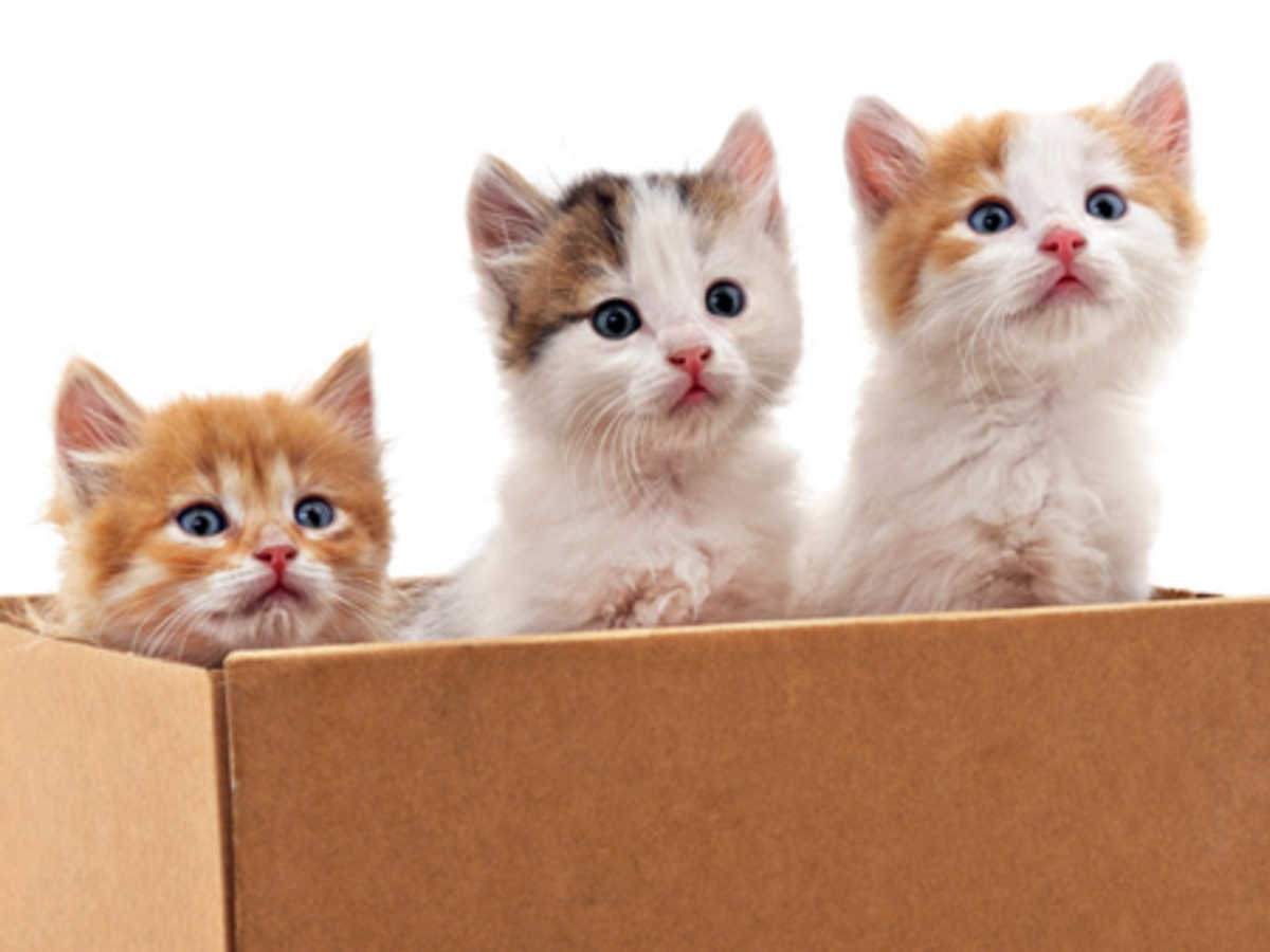 How to Find a Good Cattery for your Home?