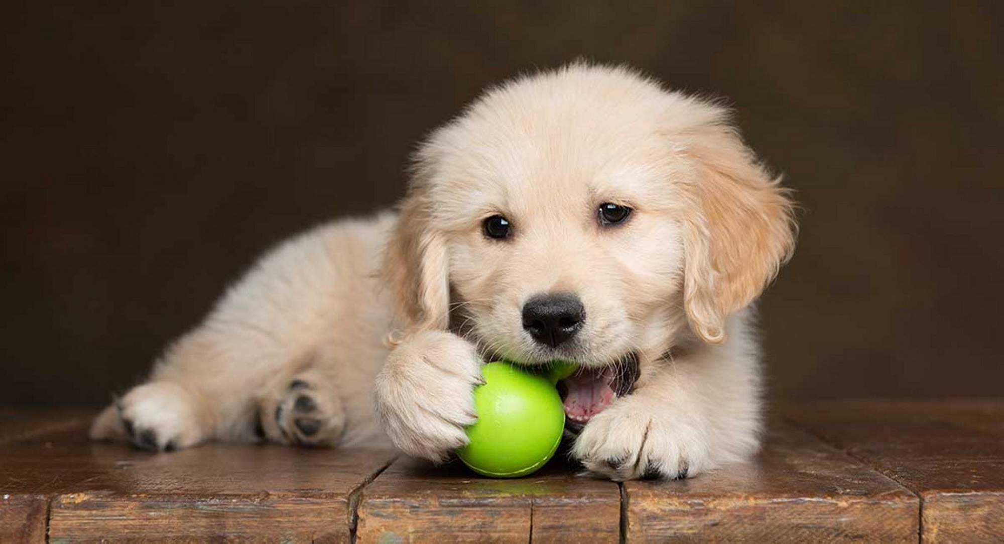 Things that you must have for your new puppy