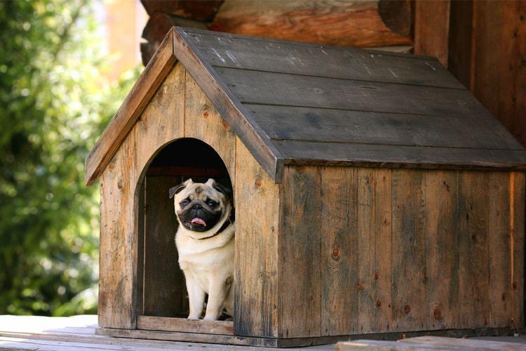 Dog Rescue Shelter pug
