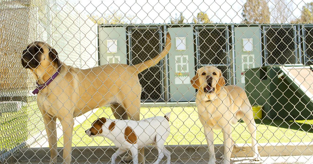 Dog Rescue Shelter
