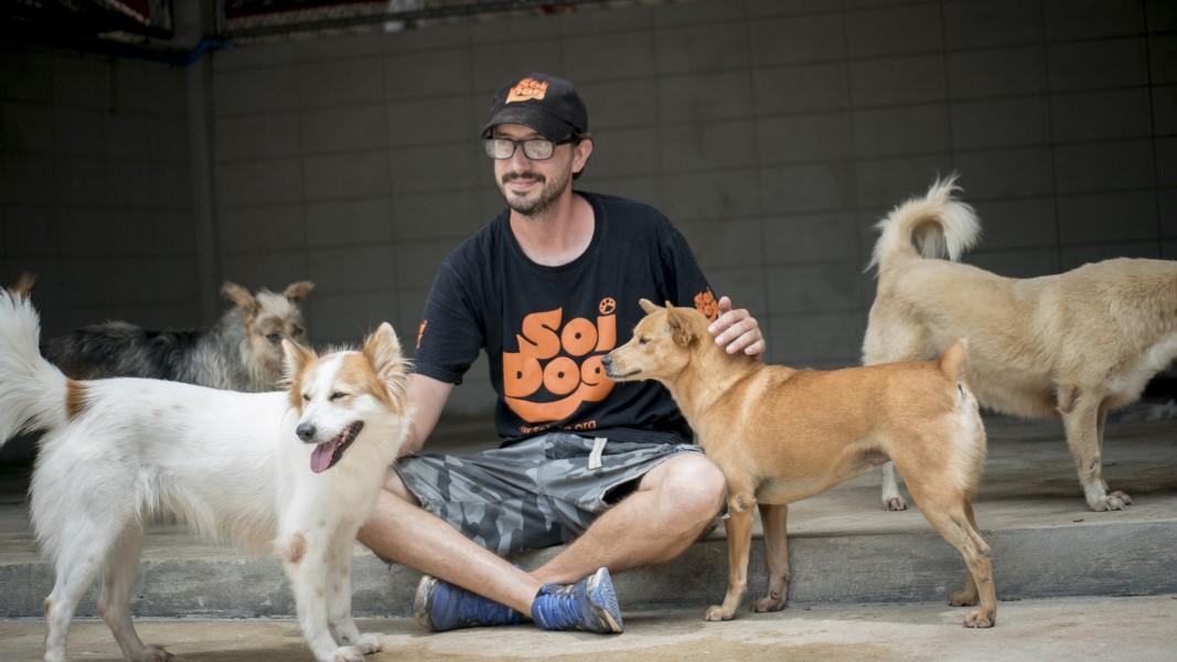 Dog Rescue Shelterok