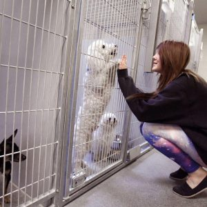 9 Tips to Help You Start a Dog Rescue Shelter