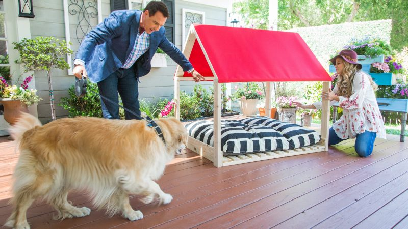 The Pros and Cons of Outdoor Dog Kennels