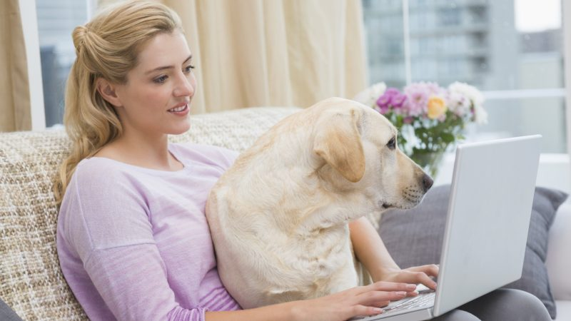 Online Pet Pharmacies – Vet-VIPPS Accreditation is essential!
