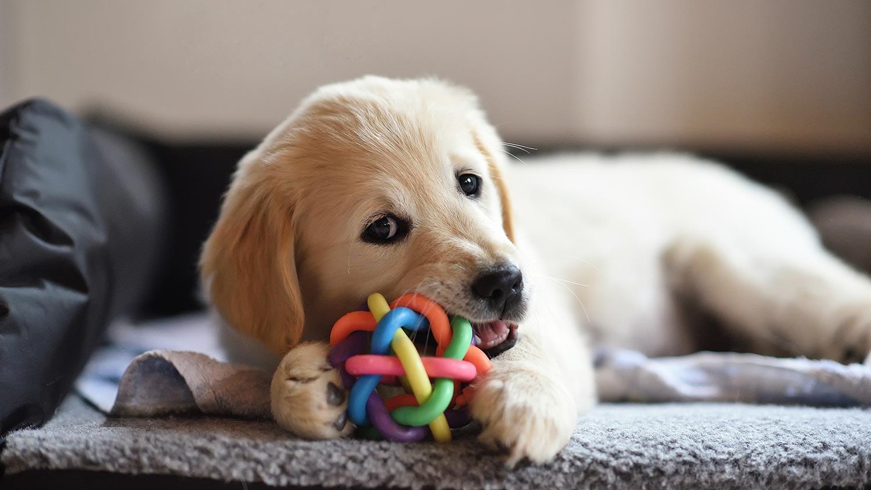 puppy new