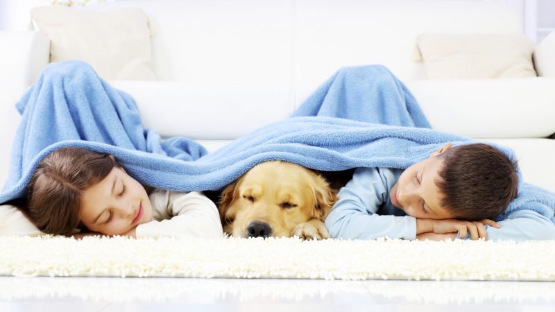 Sleeping with Your Dog: 7 Reasons Why You Shouldn't
