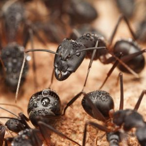 Dangerous Pests That Reside in Edmond OK
