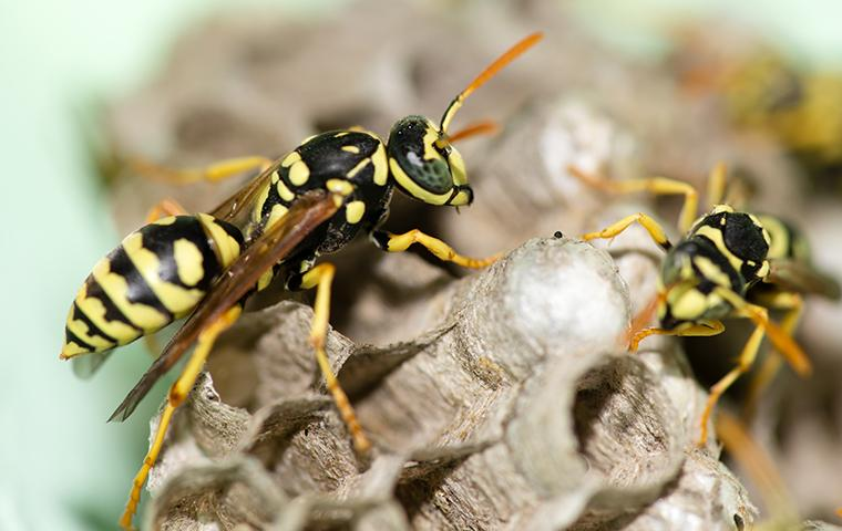 stinging-insect-identification.v2